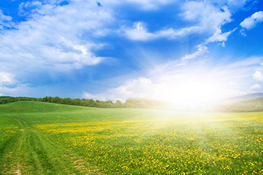 graphicstock-spring-meadow-full-of-flowers-on-a-sunny-day_r0gLAUDpbZ